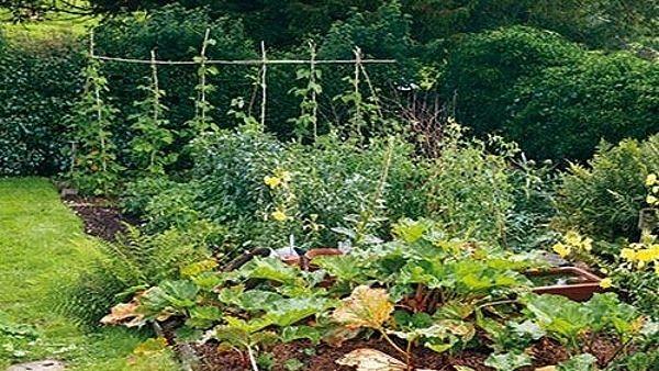 Jednoducha zeleninova zahrada